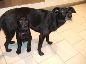 Merlin & Holly Dec 2006 018